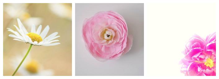 Collage una sola flor